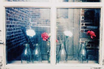 okno, kwiaty