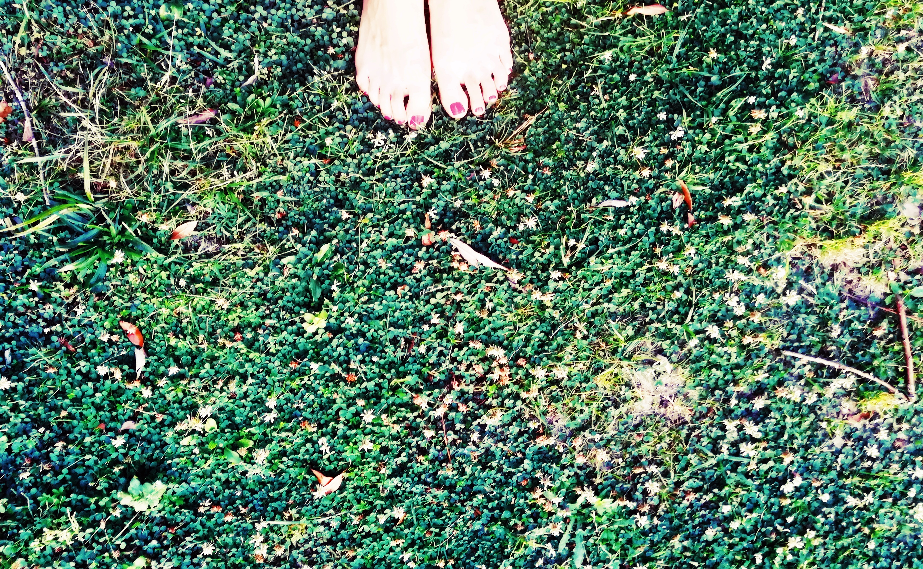 stopy, łąka, introwertycy