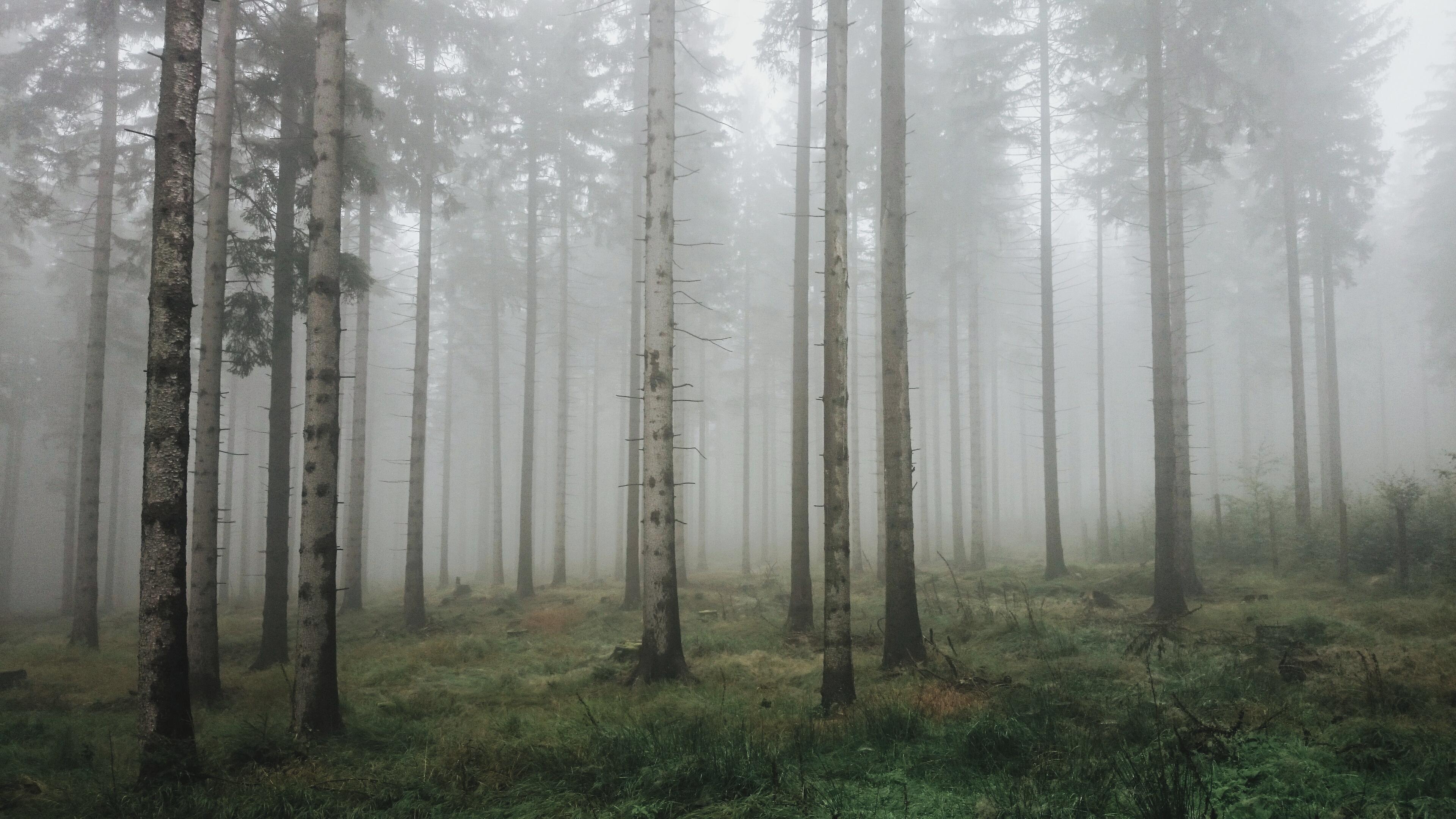 jesień, katie_lamassu, serendipity, las, mgła